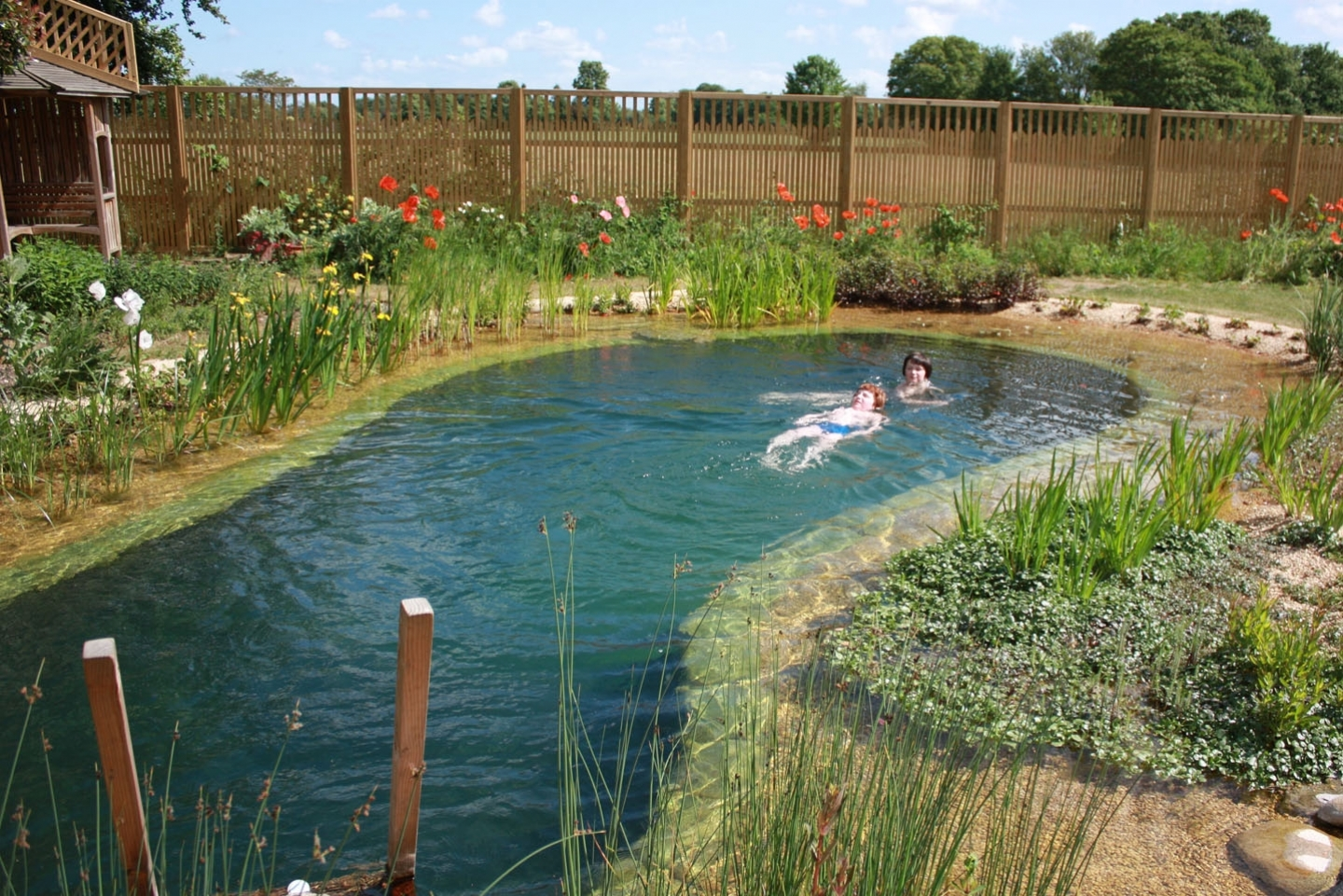 Gartenart portfolio swimming pond cambridgeshire for Pond swimming pool